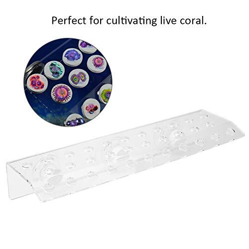 Hffheer Depósito para Peces Transparente Coral Rack Soporte Acuario Coral Frag Rack Acrílico Coral Soporte Base con ventosas