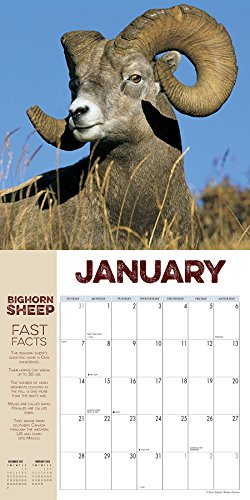 Horn Porn 2018 Wall Calendar