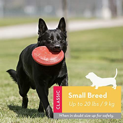 KONG - Flyer - Frisbee de Caucho Resistente - para Perros Pequeños